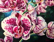 Pink and White Orchids #3 Watercolor painting by Michelle C. East