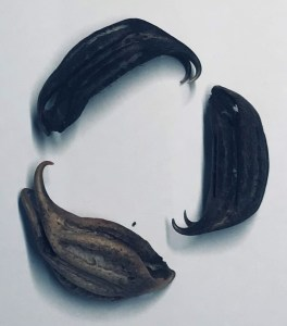 Cats Claw Seeds