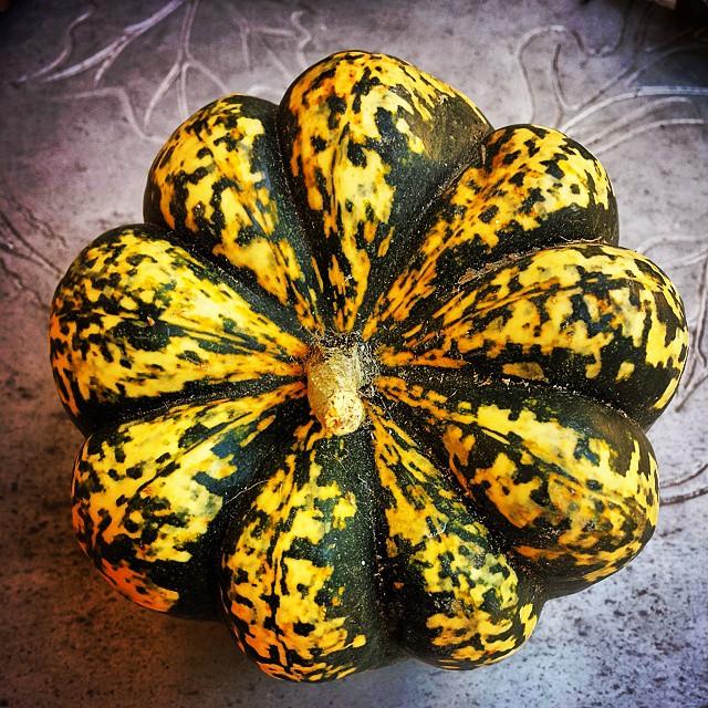 Gourd #fall #squash #vegetable #green yellow#gold