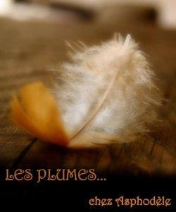 Les plumes chez Asphodèle