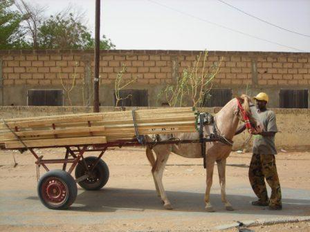 padv-horses-webv.jpg