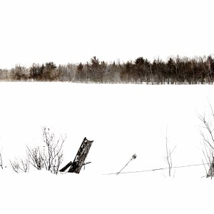 Winter's Edge Print by Michelle Lazur