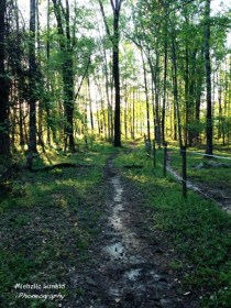 The trail through the woods is where I talk to God. It is my heaven on earth.