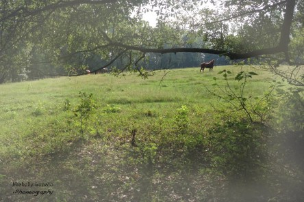 This was my view one day in the pasture. To me, this looks like a dream land.