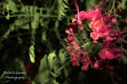 Fushia flowers with buds