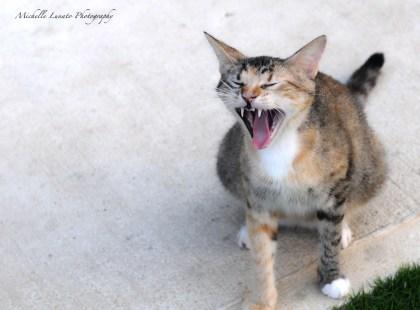 Y for yawn