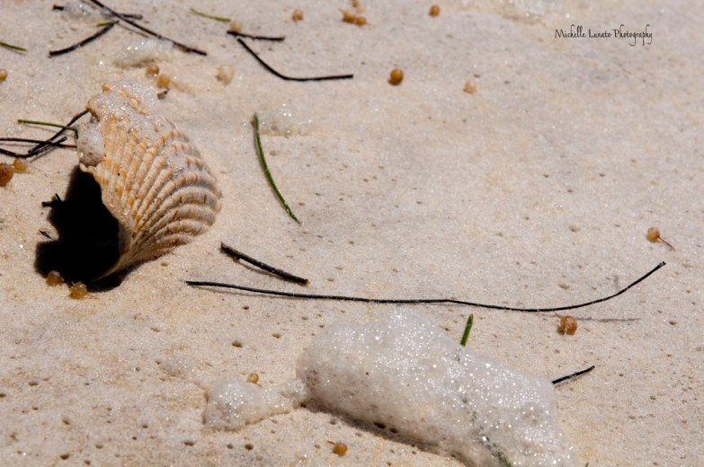 It was windy that day and seafoam was literally rolling along the sand.