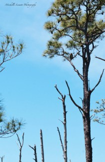 In the top right third you can see a great horned owl that was watching us.