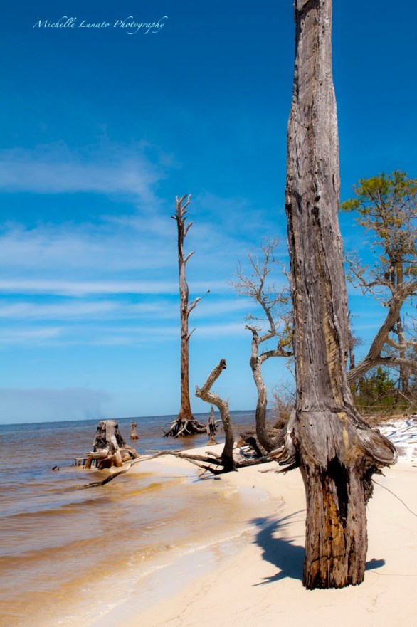 I loved these tattered trees in the water.