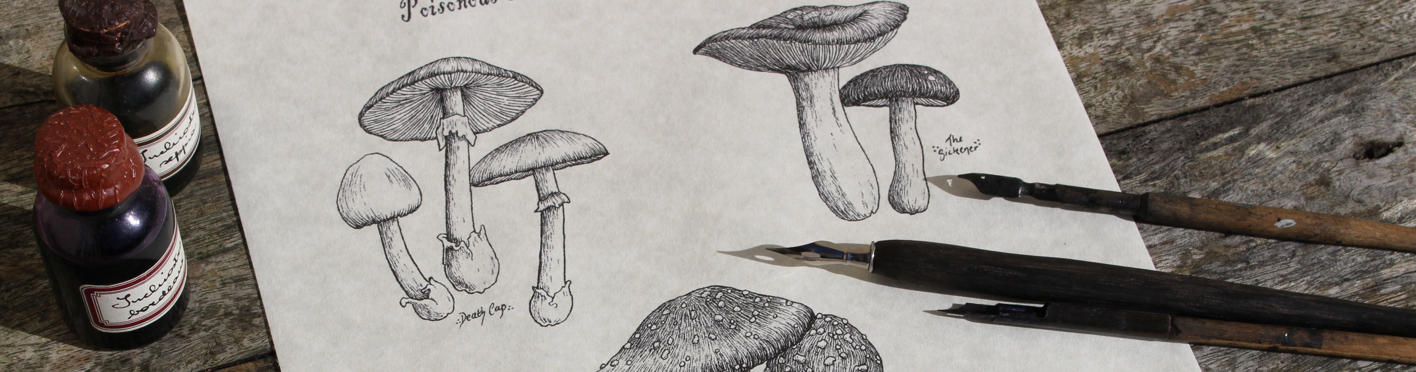 Toadstool-traditional-dip-pen-and-ink-drawing-by-Michelle-Maiden-banner