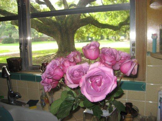 8959722_f520 roses oak