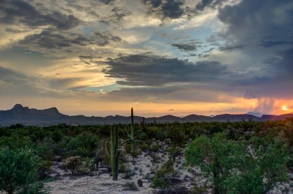 desert landscapes michelle munoz's