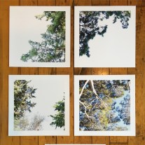 12 x 12 inch archival prints from picnic sites in Corte Madera, CA.