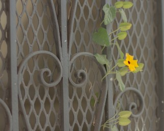 a flower grows on guerrero