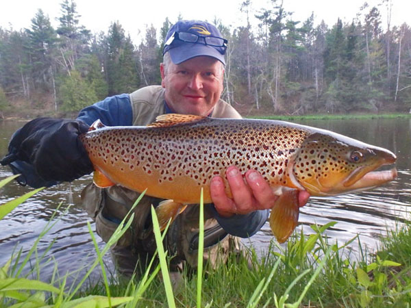 Dry Fly Action for Brown Trout on the Au Sable