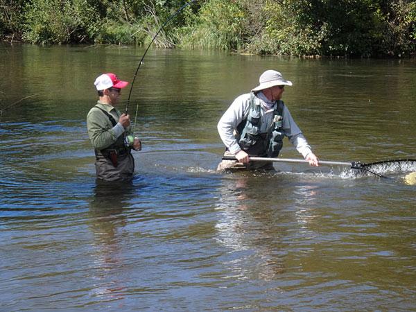 Fighting-King-Salmon-Betsie-River