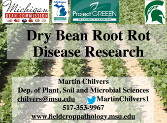 Dry Bean Root Rot Disease