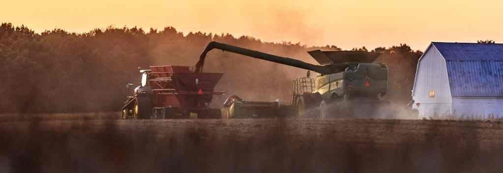 Tractor Harvesting Beans