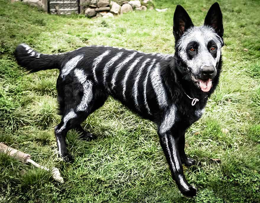 Awesome Halloween Dog Costumes