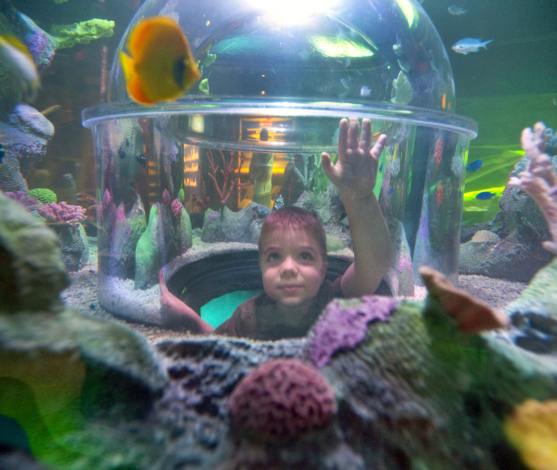 SEA LIFE Michigan Aquarium to Open Jan. 29th in Auburn Hills