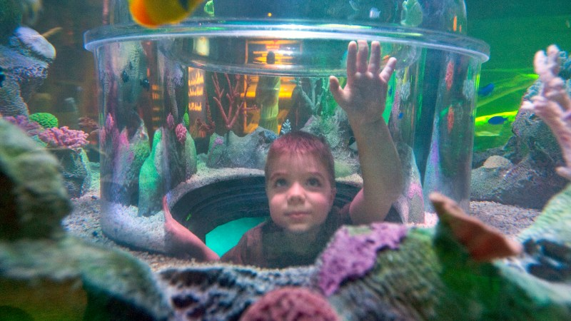 SEA LIFE Michigan Aquarium to Open Jan. 29th in Auburn Hills