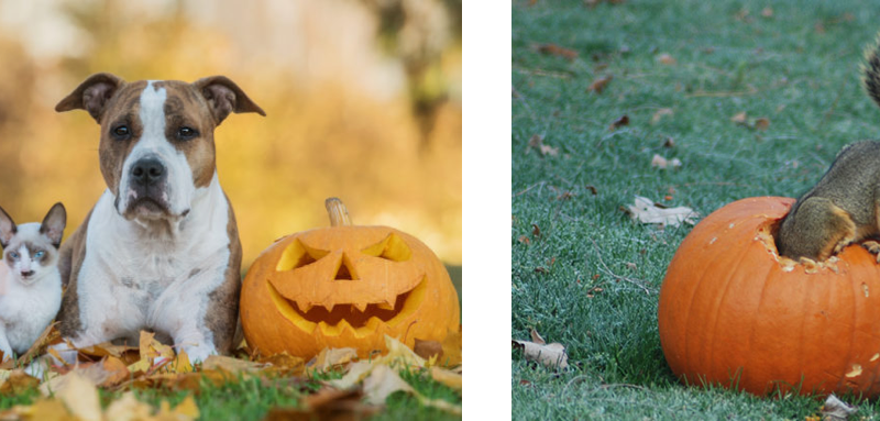 How to Keep Pets and Wildlife Safe This Halloween