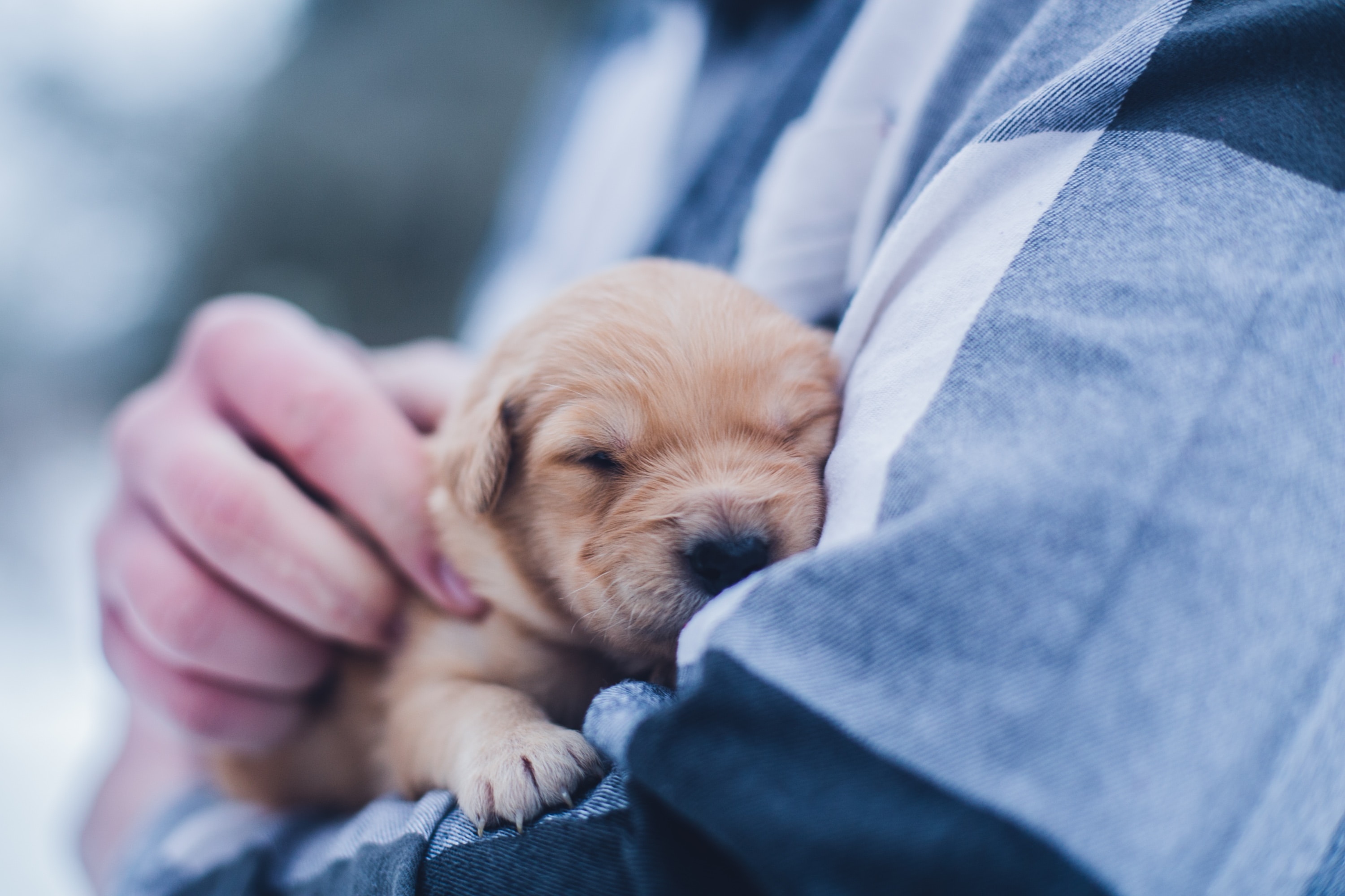 5 of the Best Dog Breeds for Families with Young Children