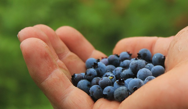 blueberries-801571_640