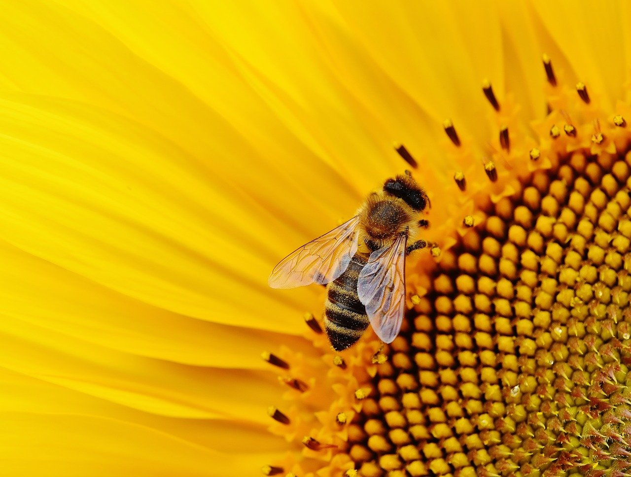 How 4-H Members are Showing How Pollinators are Vital to Food Production – Interview