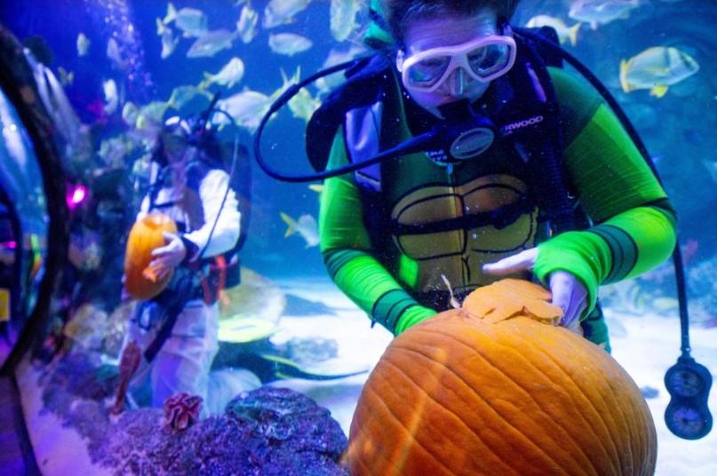 FISH OR TREAT at SEA LIFE Michigan Aquarium