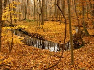 Autumn at Dowagiac Woods Nature Sanctuary