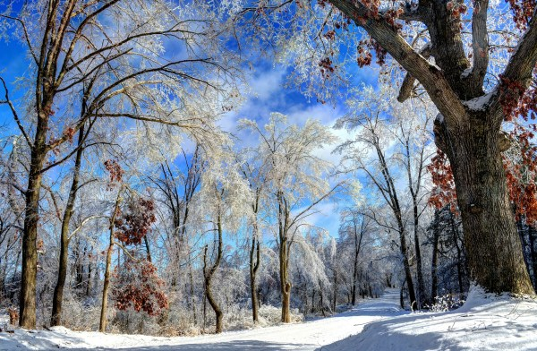 Winter Wonderland Michigan
