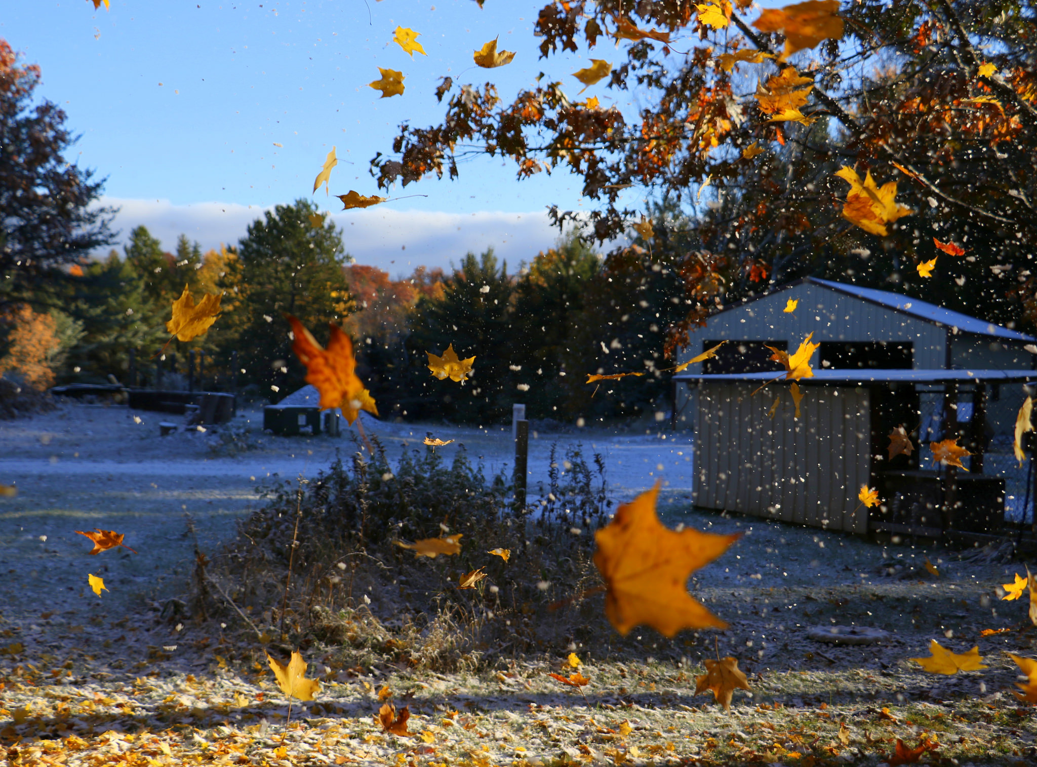 Images Of Snow Falling Wallpaper Fall Ing Michigan Is Still Michigan Edition Michigan In