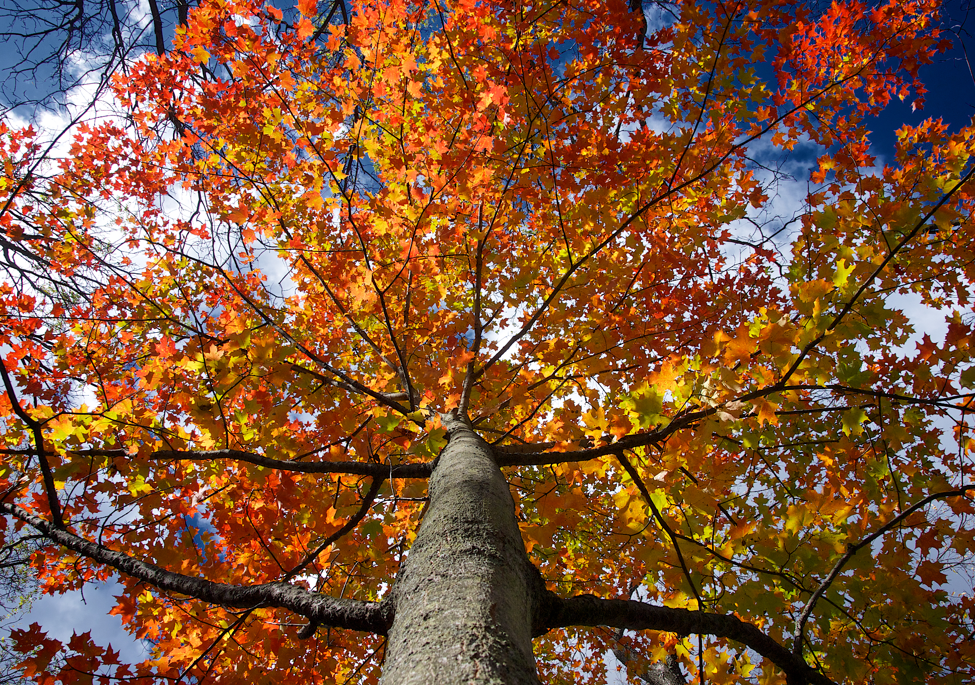 Autumn Falling Leaves Wallpaper Fiery Fall Foliage At Fenner Michigan In Pictures