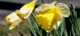 Vraiment le printemps
