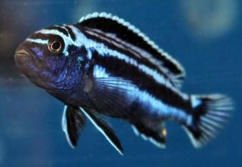 2014-10-25-fish-1-016