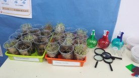Seguimientos de las plantas