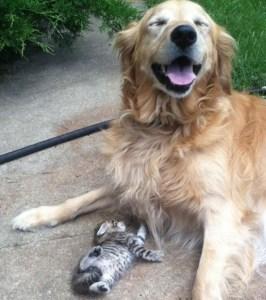 Seguros de mascota,seguros para perros, seguros para gatos