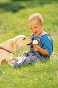 alimentos no recomendados para perros