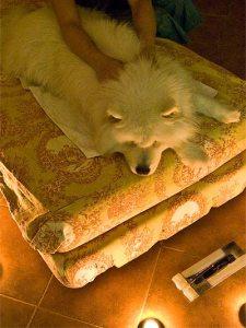 spa perros