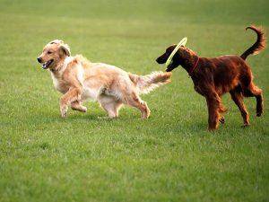 seguro responsabilidad civil para perros