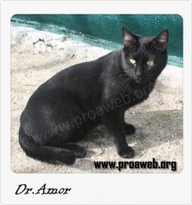 Dr Amor-w