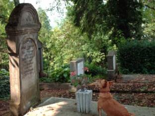 perro-fiel-en-cementerio