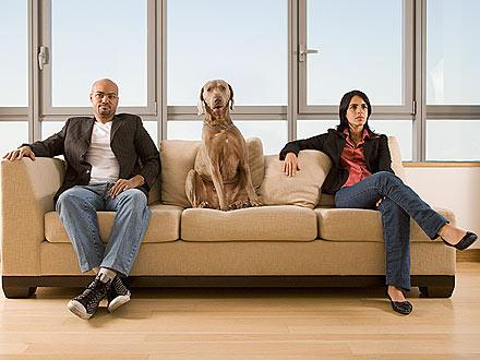 divorcio mascotas