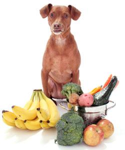 Lista de frutas que puede comer un perro y no puede comer un perro