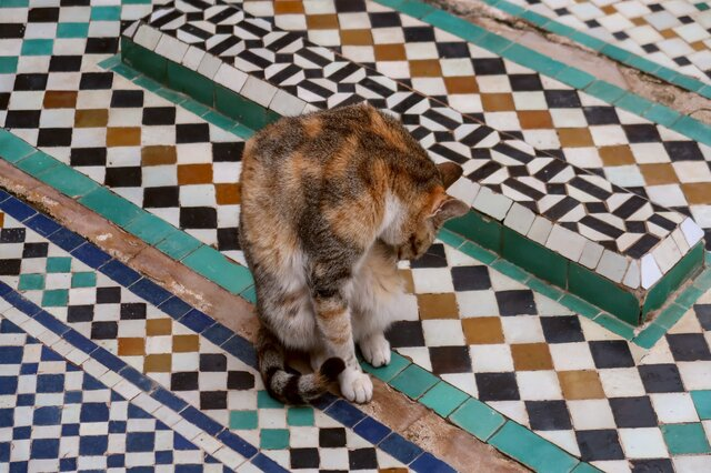 pet friendly tile