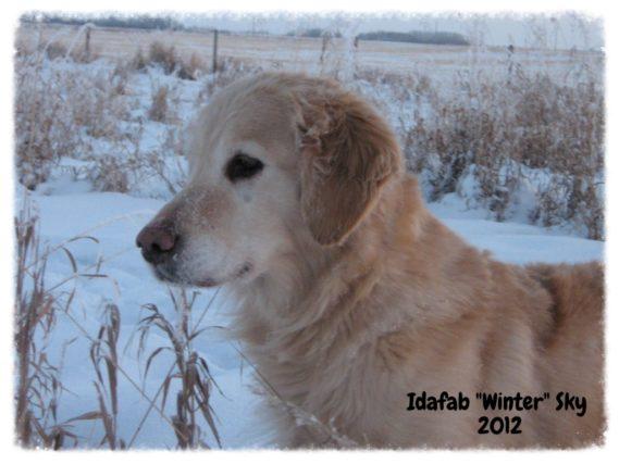 Idafab Winter Sky