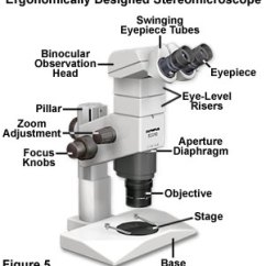 Binocular Compound Microscope Diagram Philips T5 Ballast Wiring Molecular Expressions Microscopy Primer: Anatomy Of The - Introduction To ...