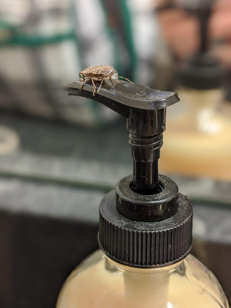Stink bug on a soap dispenser.