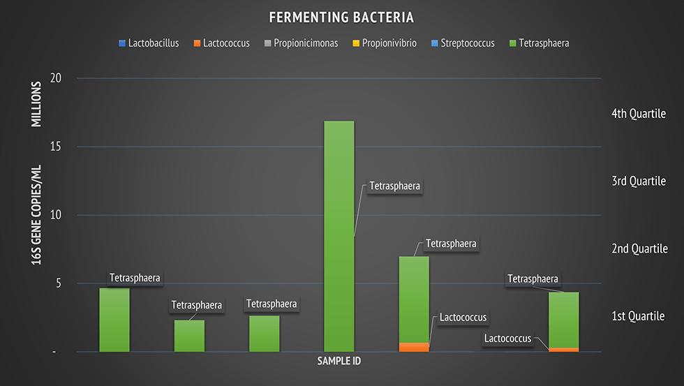 fermenting bacteria
